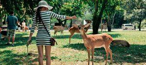 Khao Kheow safari park Pattaya