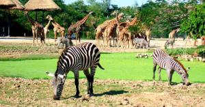 Khao kheow safari park