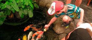 Koi feeding underwater world