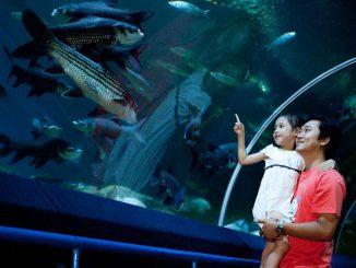 Underwater world pattaya thumbnail